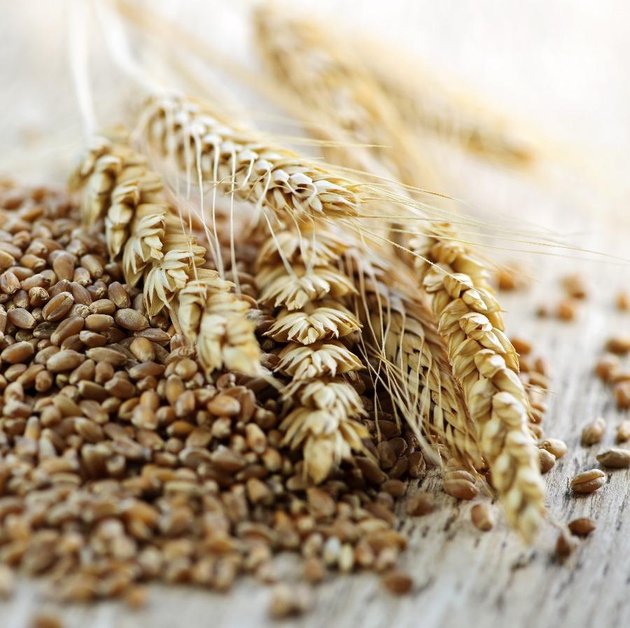 全麥類食物可幫助睡眠