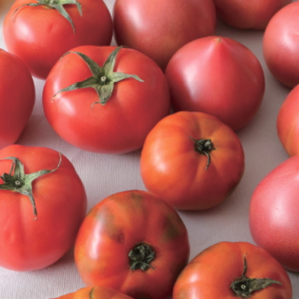 最齊全【蕃茄】選購及保存方法 都在這篇!