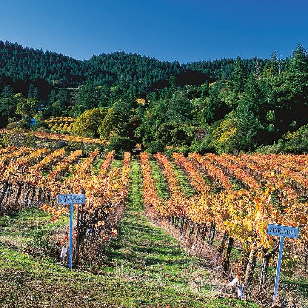 【葡萄酒知識】加州葡萄酒之星-金芬黛ZINFANDEL