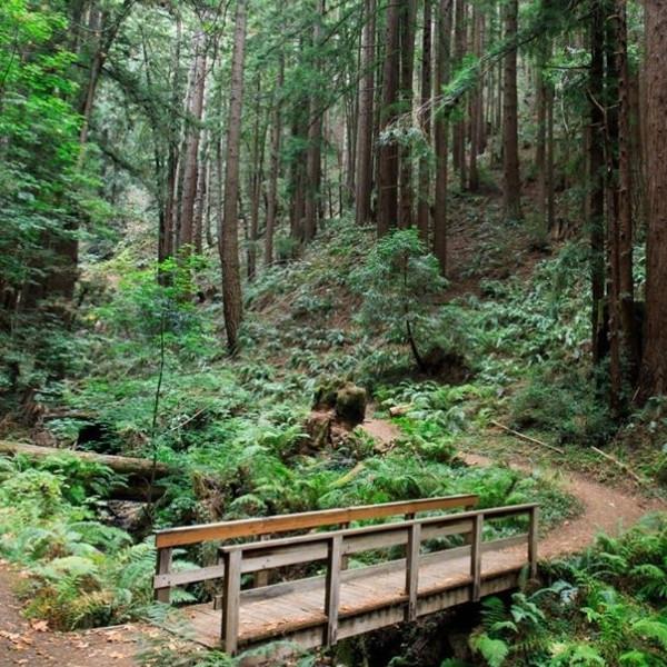 6條灣區森林防疫消暑健行路線